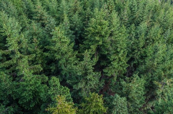 An aerial view of a forest.
