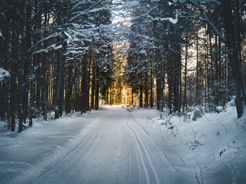 A road and trees covered in snow.