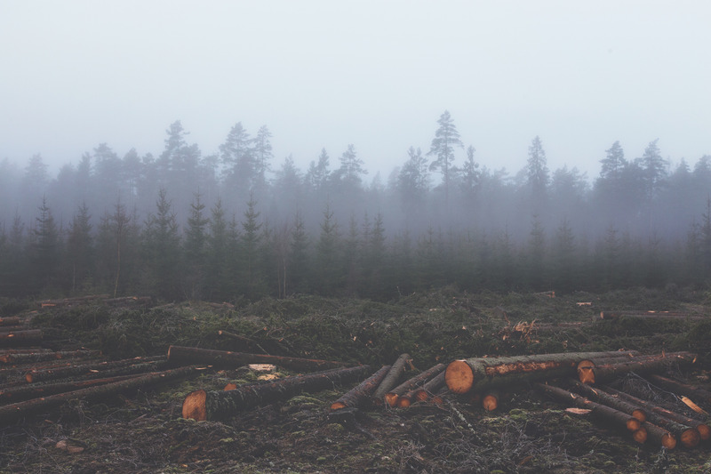 Cut down trees with a forest surrounded by fog in the distance.
