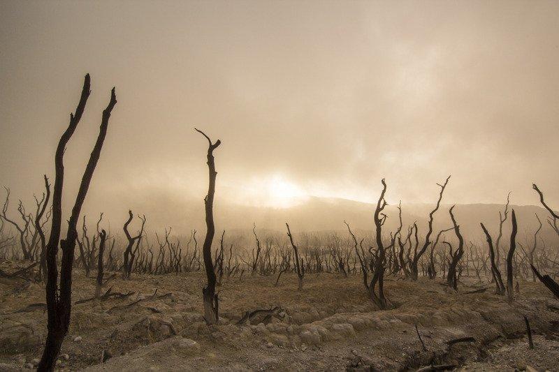 Dead trees in a desert